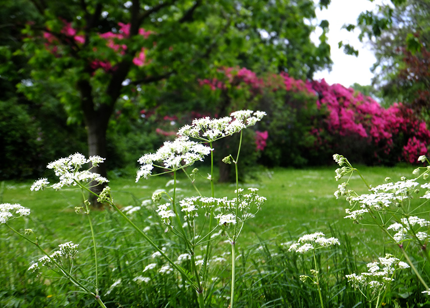 Highfields-park-jenna-michelle-pink-blog.jpg
