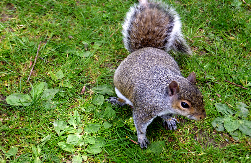 Squirrel-JMPBlog.jpg