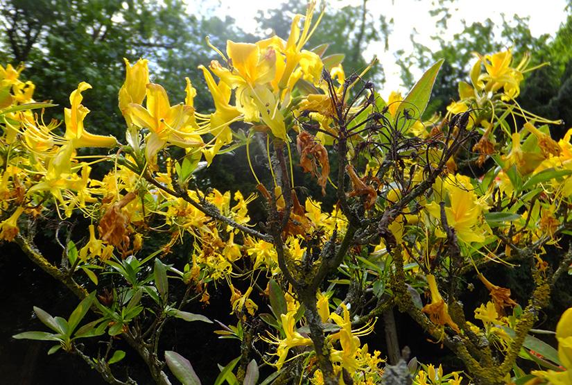 Yellow-flowers-JMPBLog.jpg