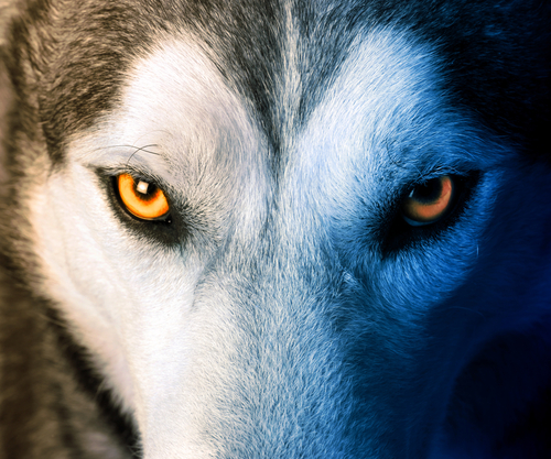 Lessons from Nature_MH4.0_Wolf