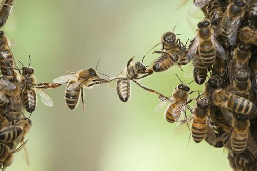 MH4.0_People Optimisation_Bees