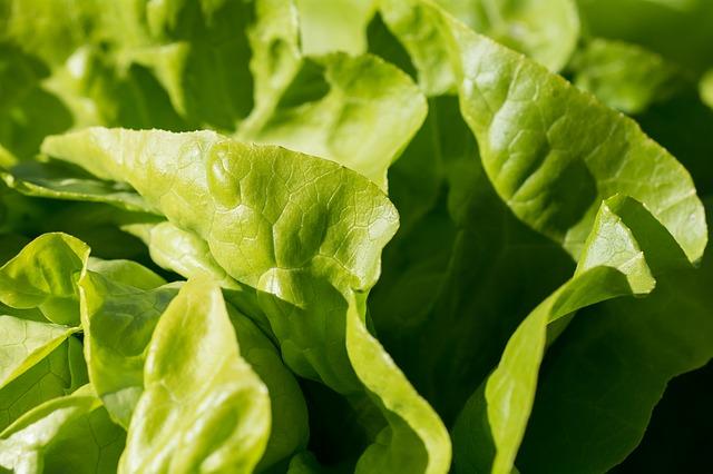 salad-1710328_640.jpg