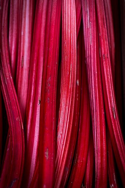 rhubarb-839618_640.jpg