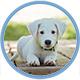small_animals_logo80x80.jpg