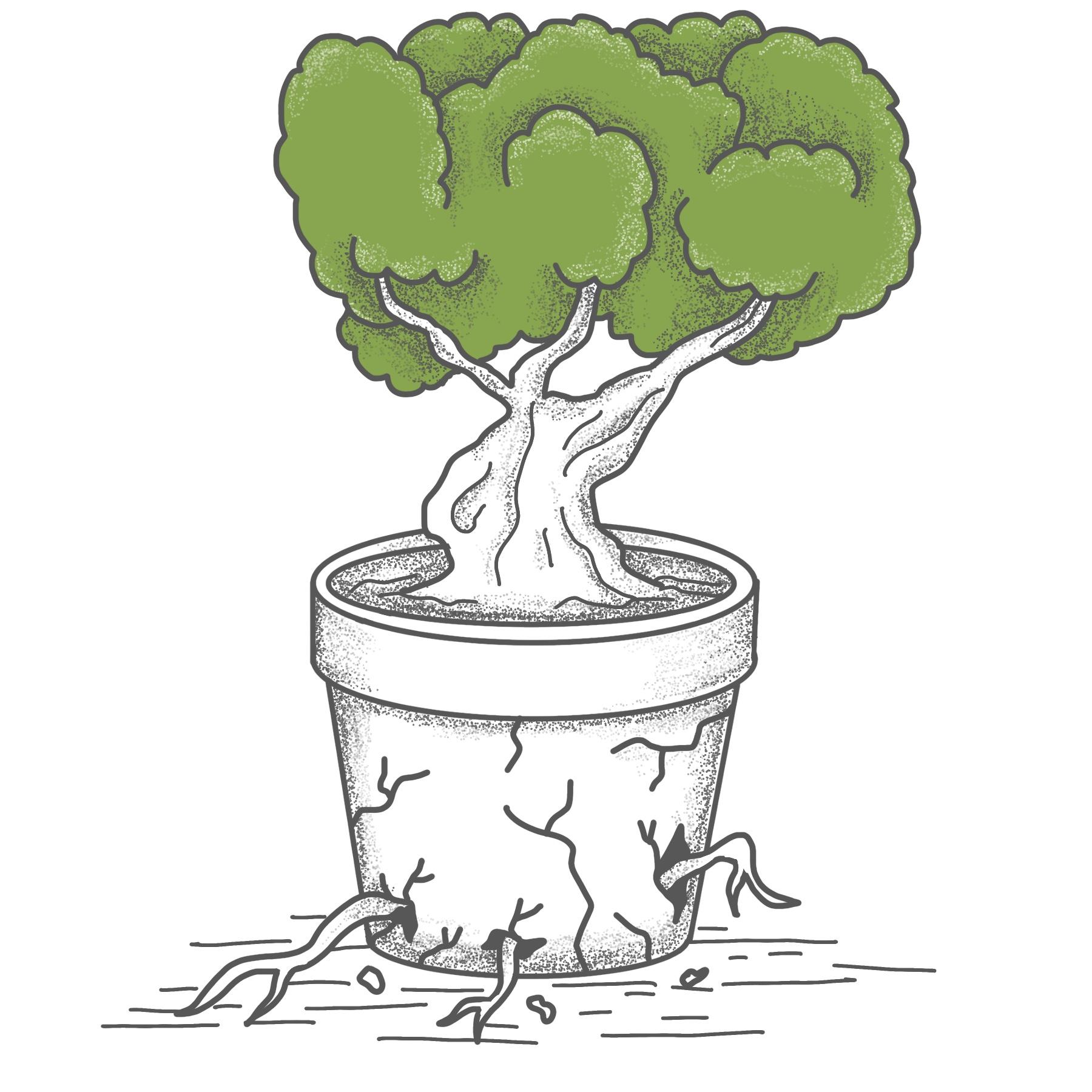- Quand la plante est assez solide, nous pouvons la replanter dans l'environnement qui lui correspond le mieux (jardin, ville, maison, forêt,...).