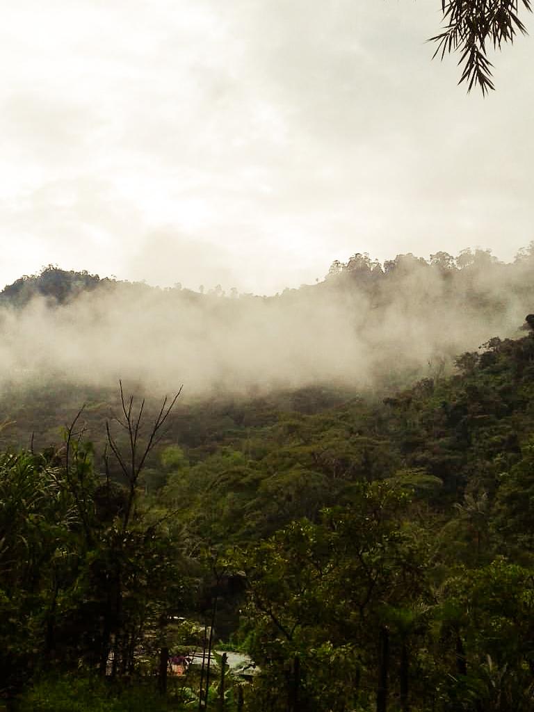 La brume à la Finca