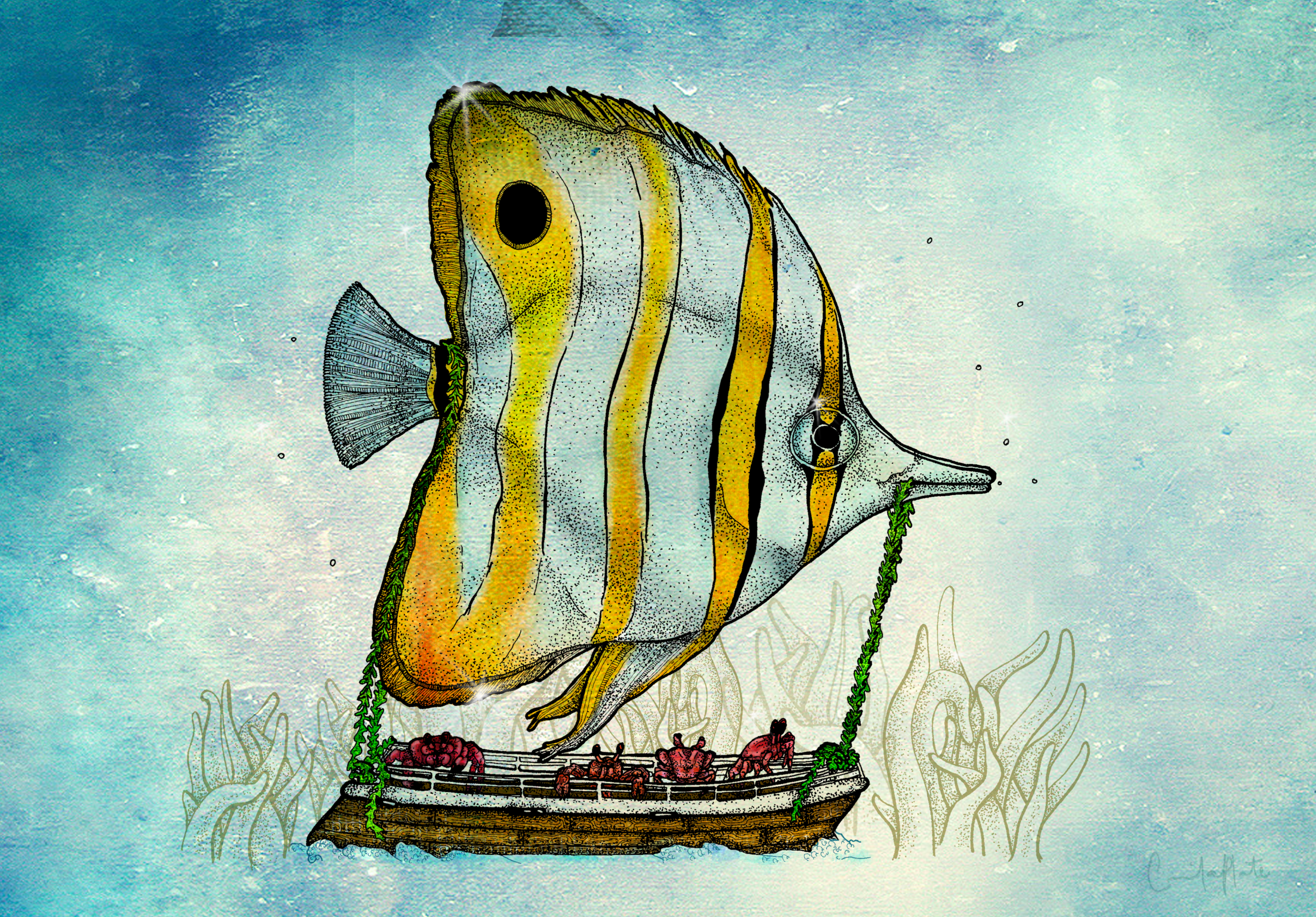 Poisson voilier.png