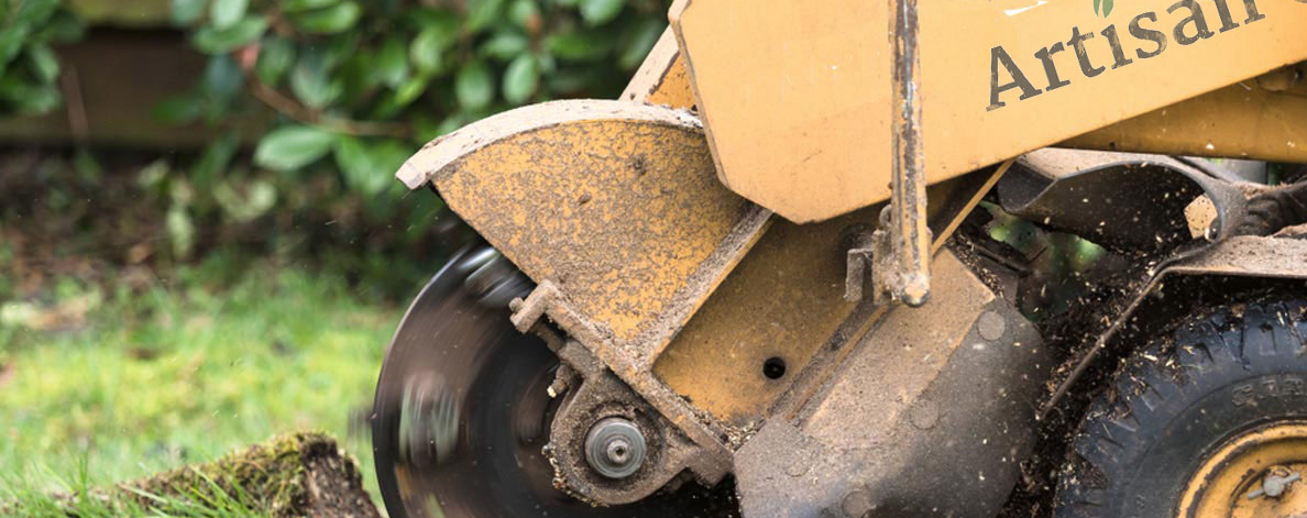 Stump Grinding & Removal - Say Goodbye To Stumps Today!