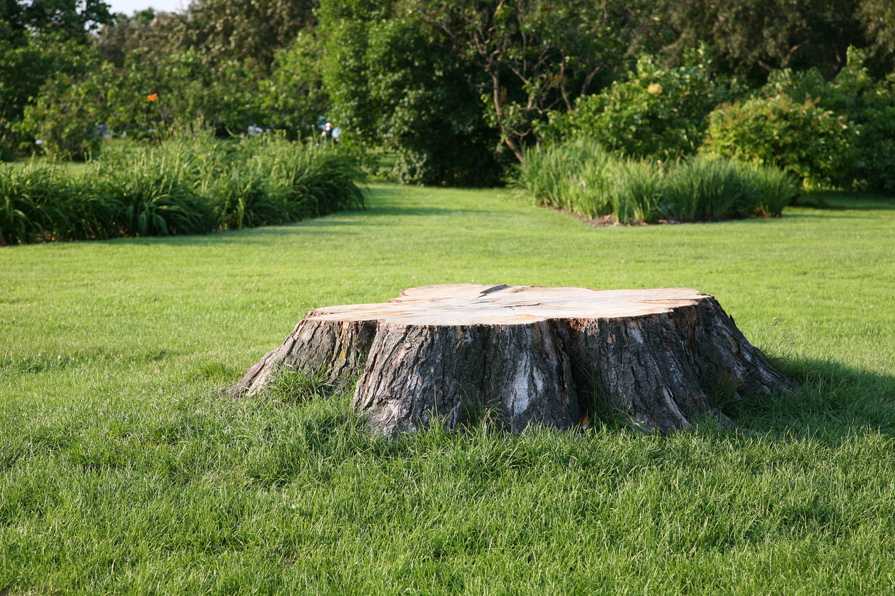 Once Your Stumps Are Gone… - What Else Can We Do For You?