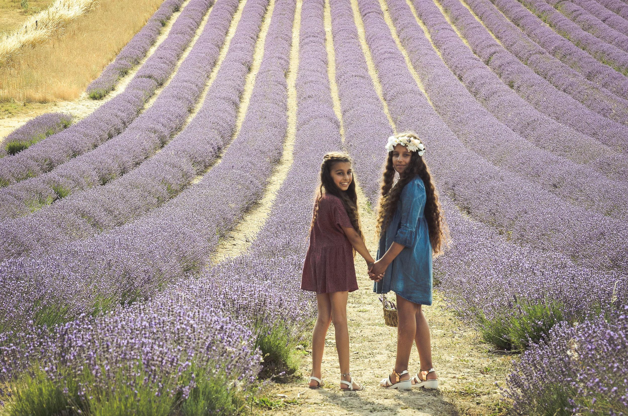 Gorgeous Sisters   at Lordington Lavender