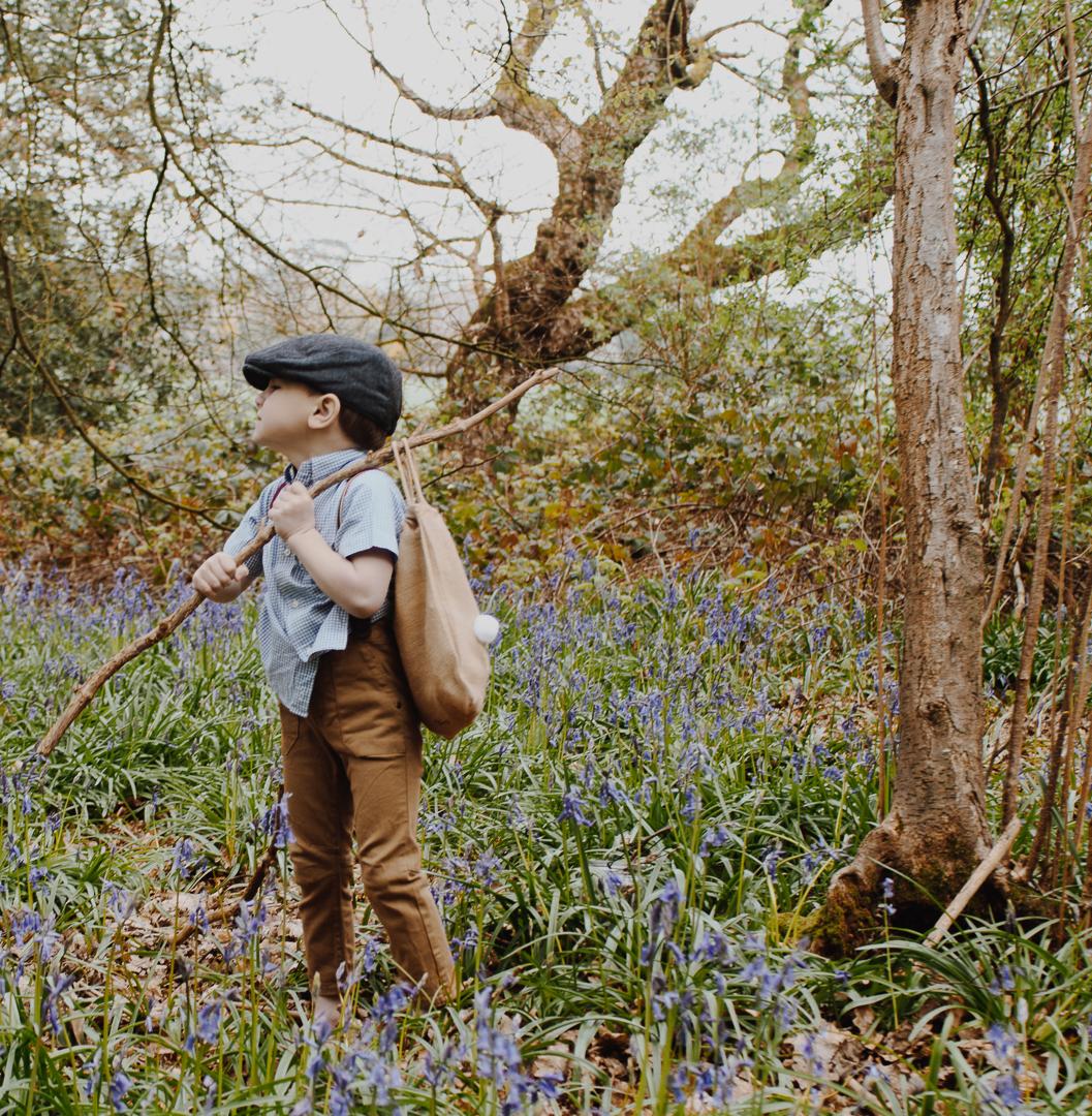 Rex Bluebells Hampshire UK