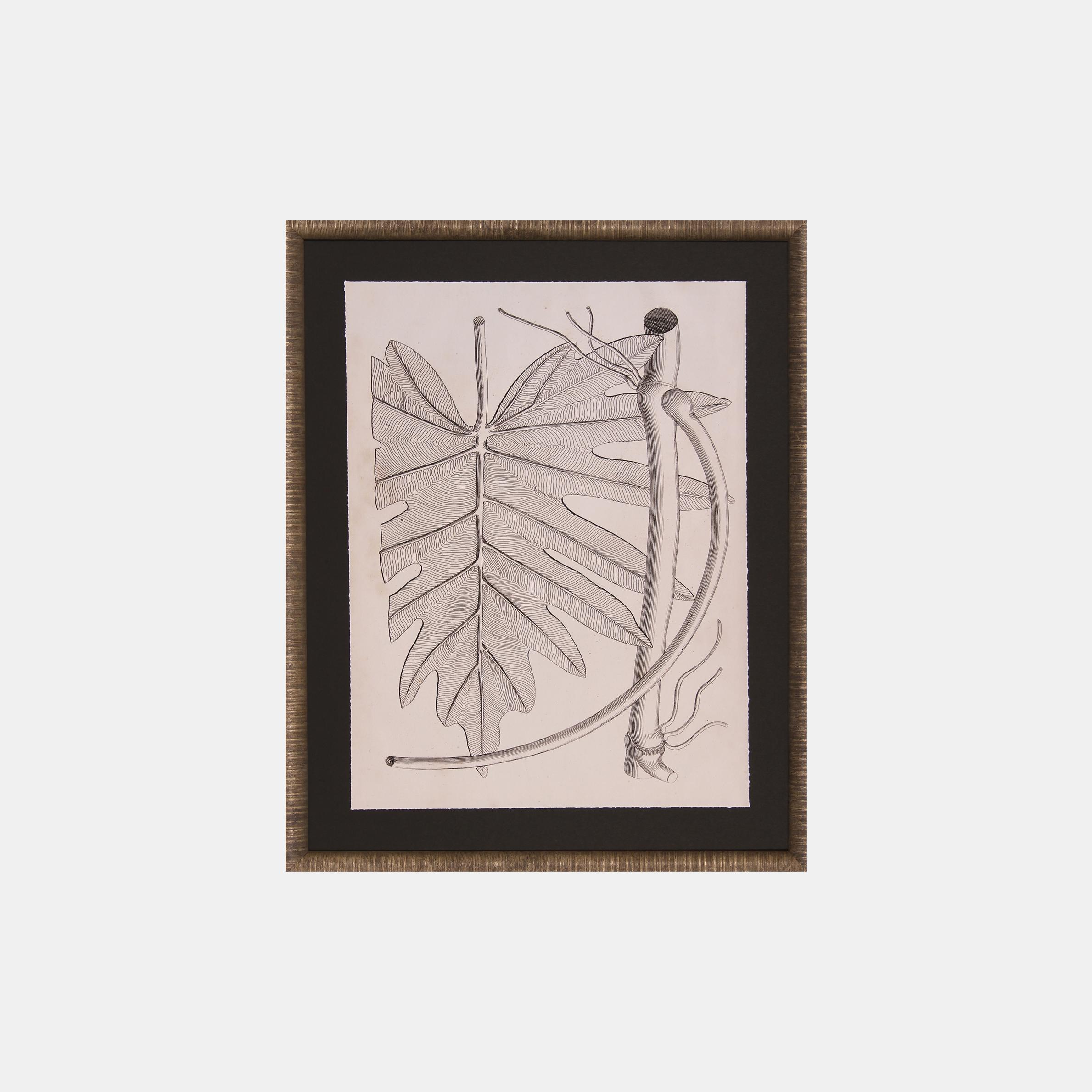 Distinctive Leaves I  SKU4892SCS