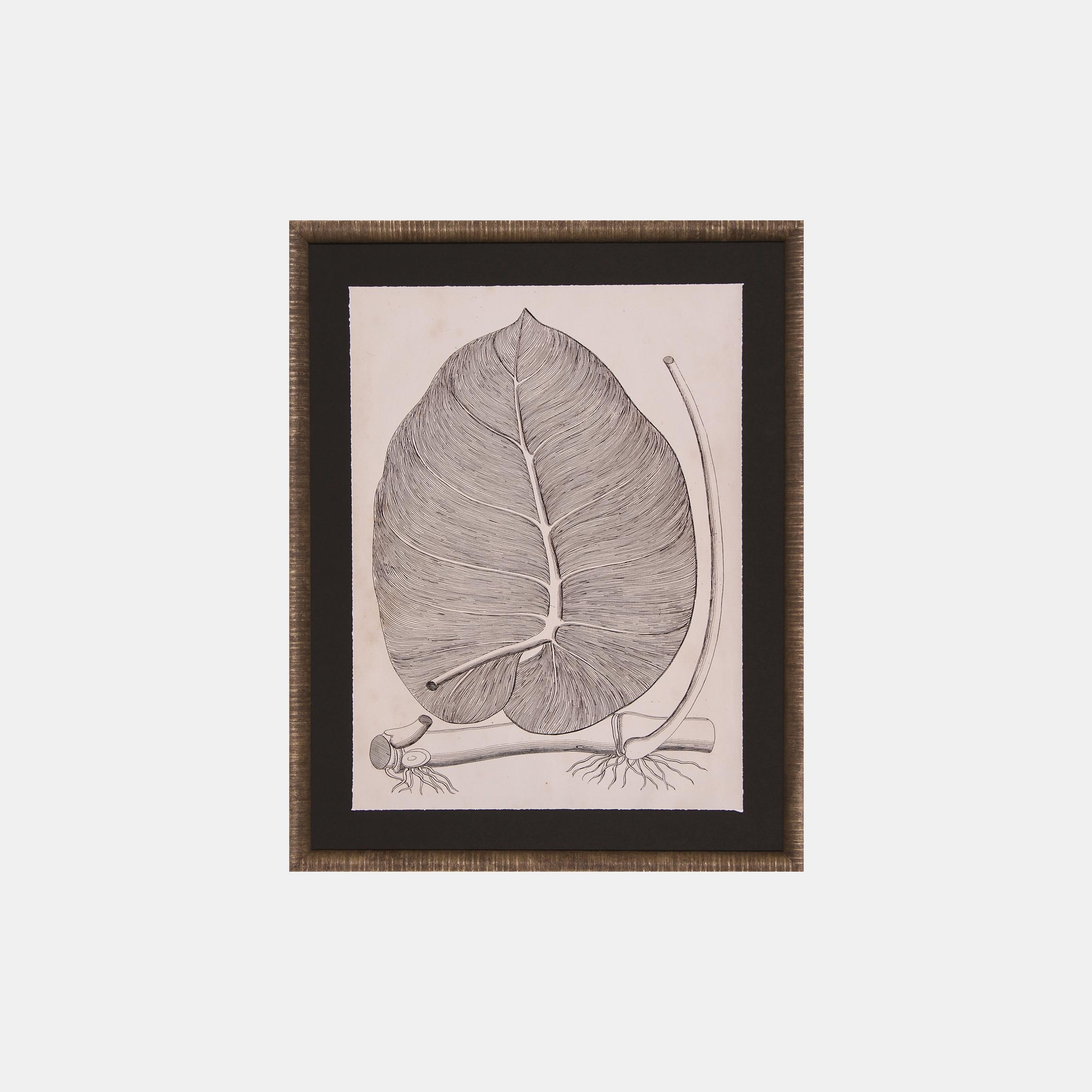 Distinctive Leaves II  SKU5562SCS
