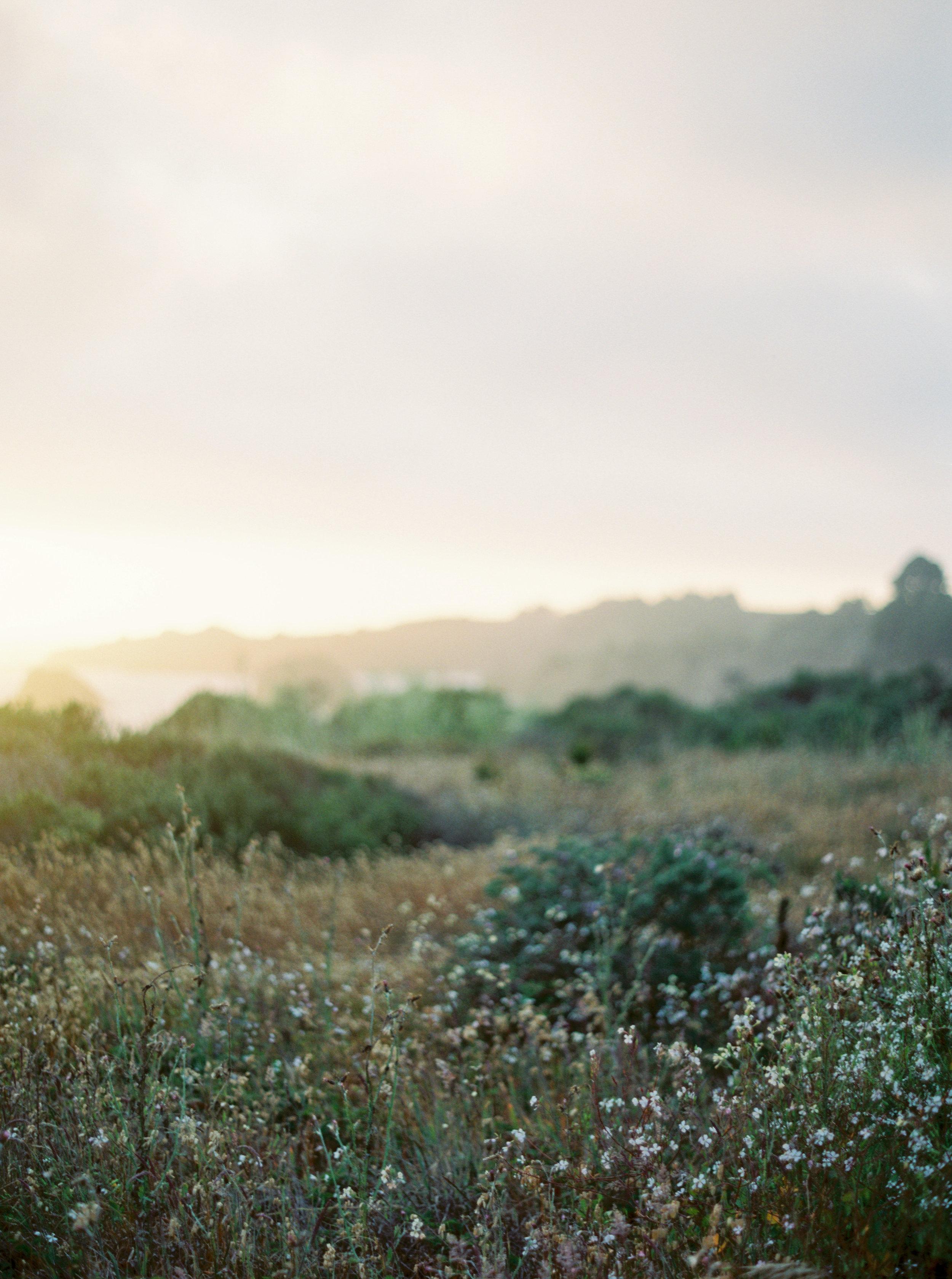 JenHuang-elk-california-28-8649_12.jpg