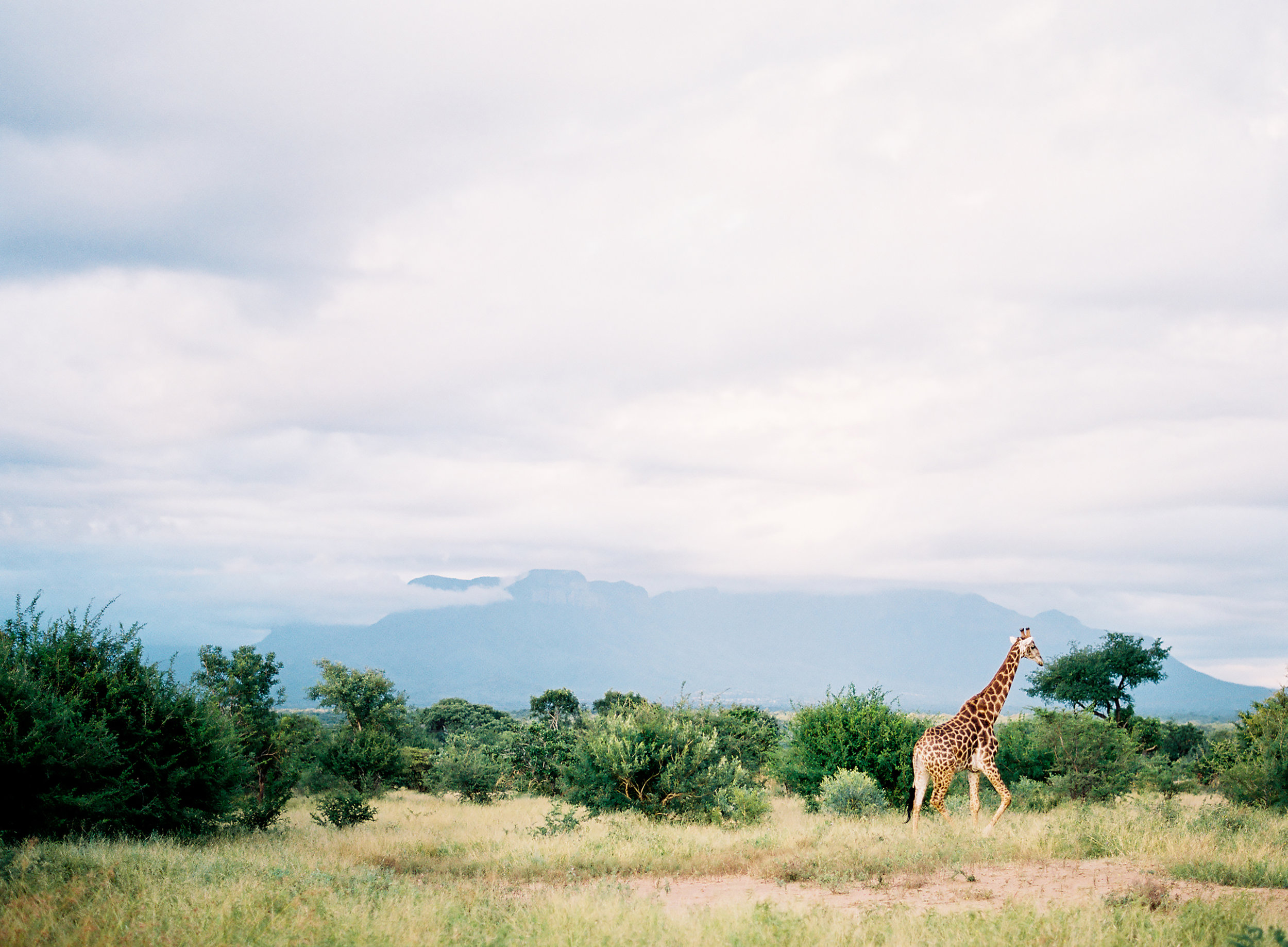 110_009631-R1-E027_AfricaFilm.jpg