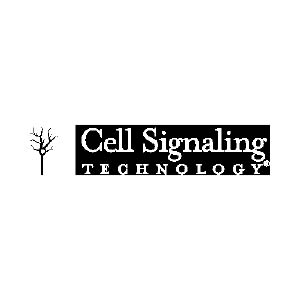 Cell Signal Technology