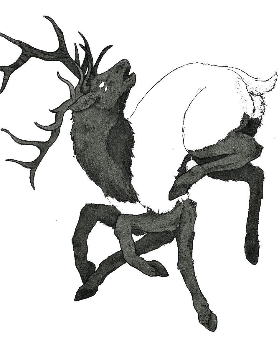 Deer Legs.jpg