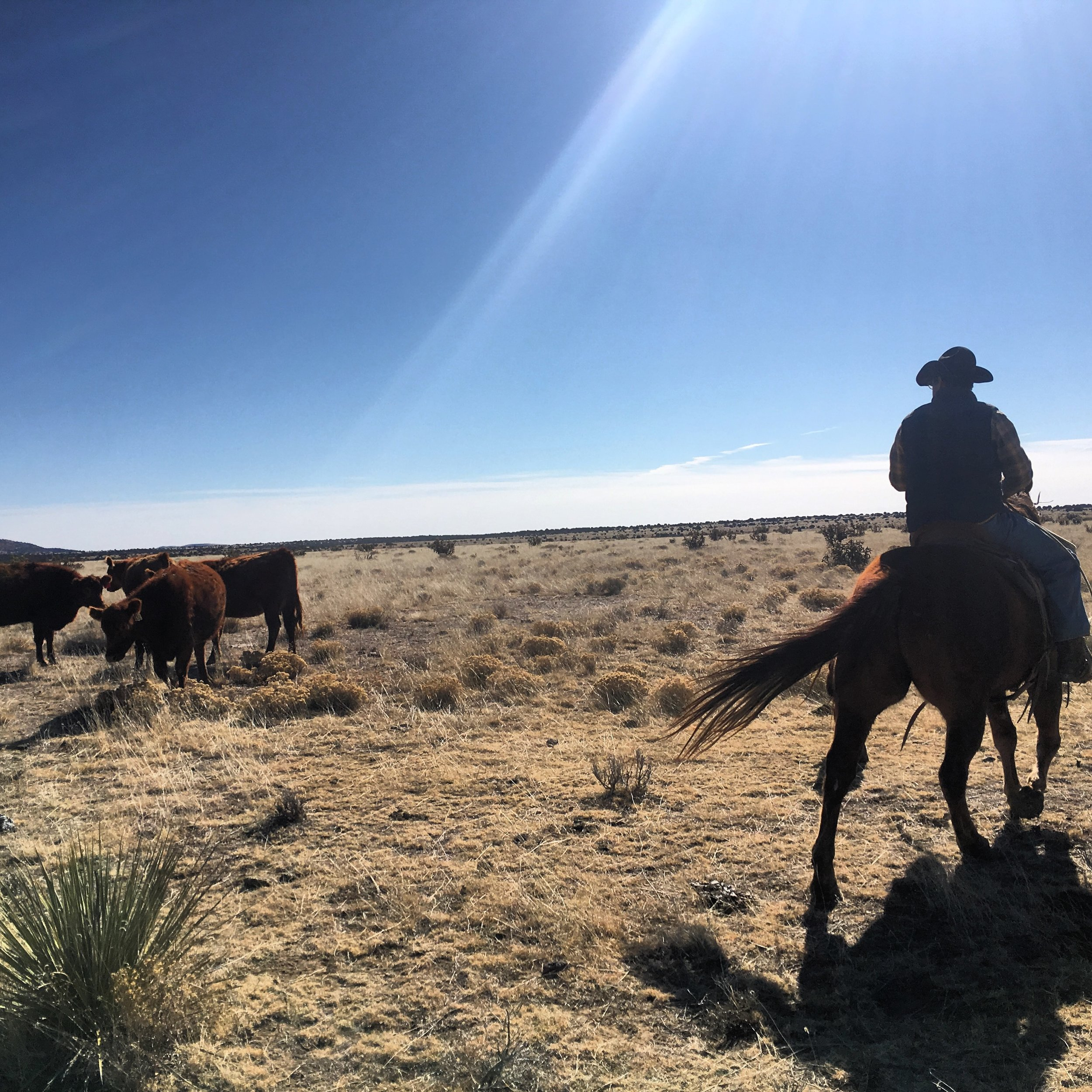 The shortgrass prairie: Anderson pasture.