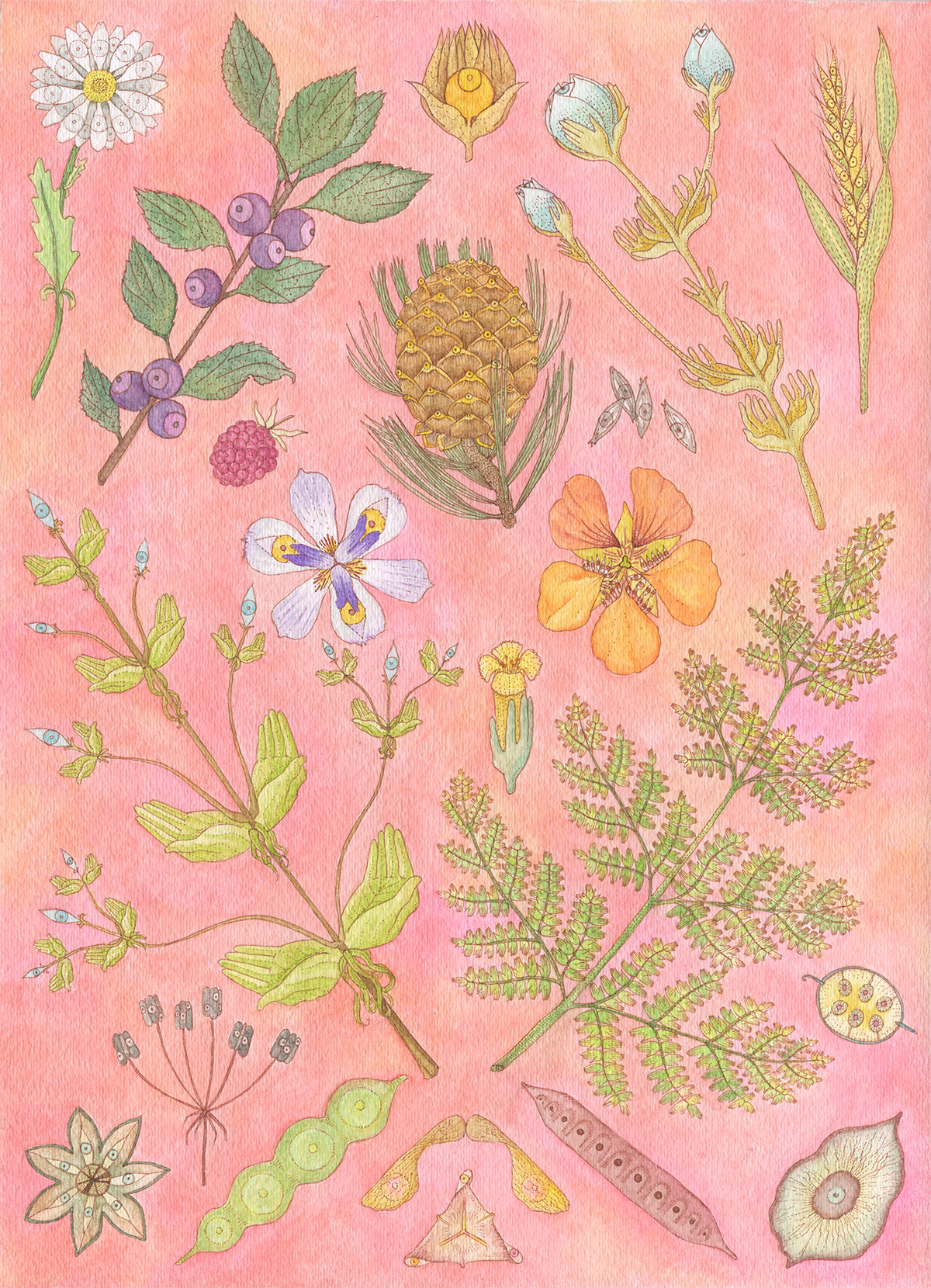 Plants (small file).png