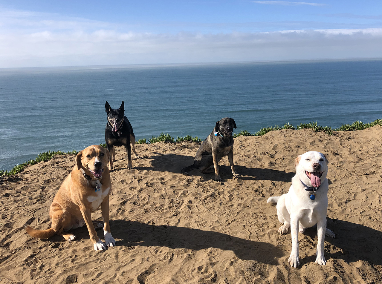A happy pack at Ft Funston