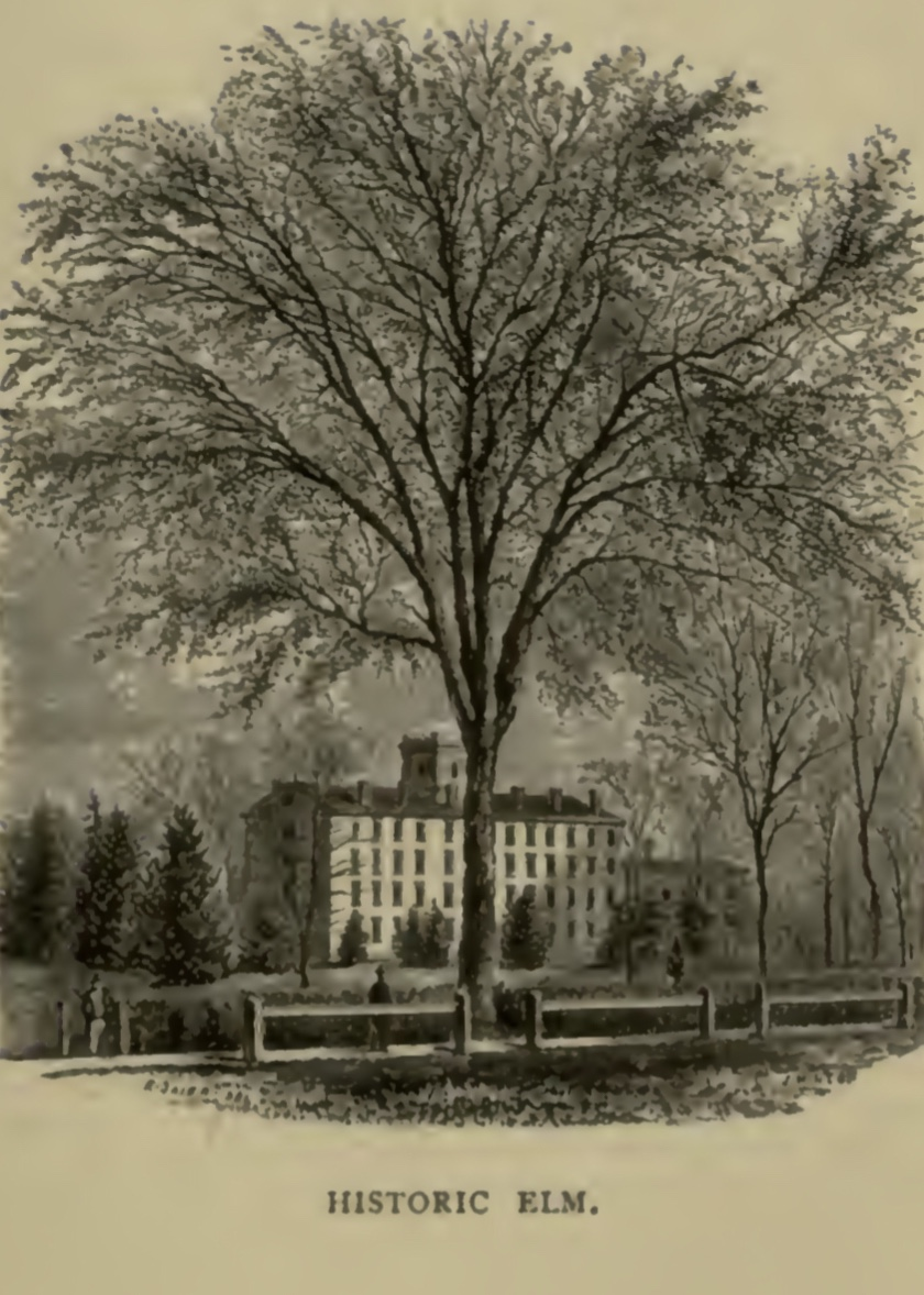 Oberlin's Historic Elm on Tappan Square