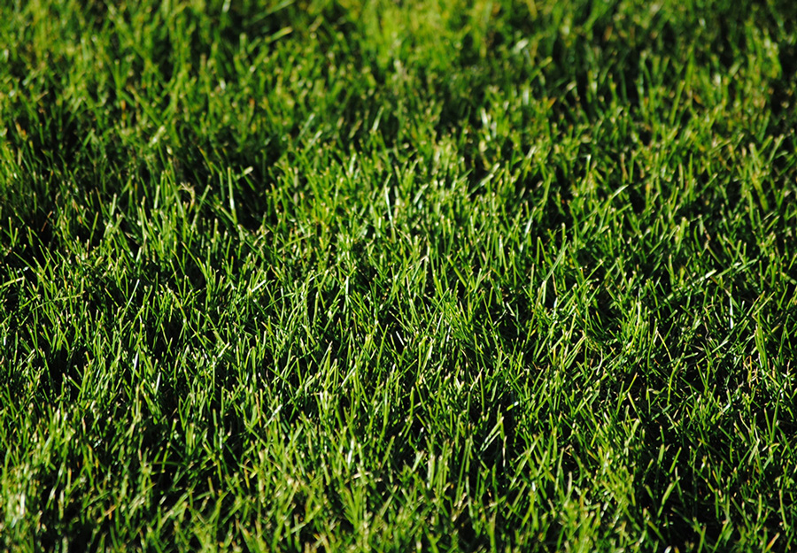 Up-close view of a green lawn