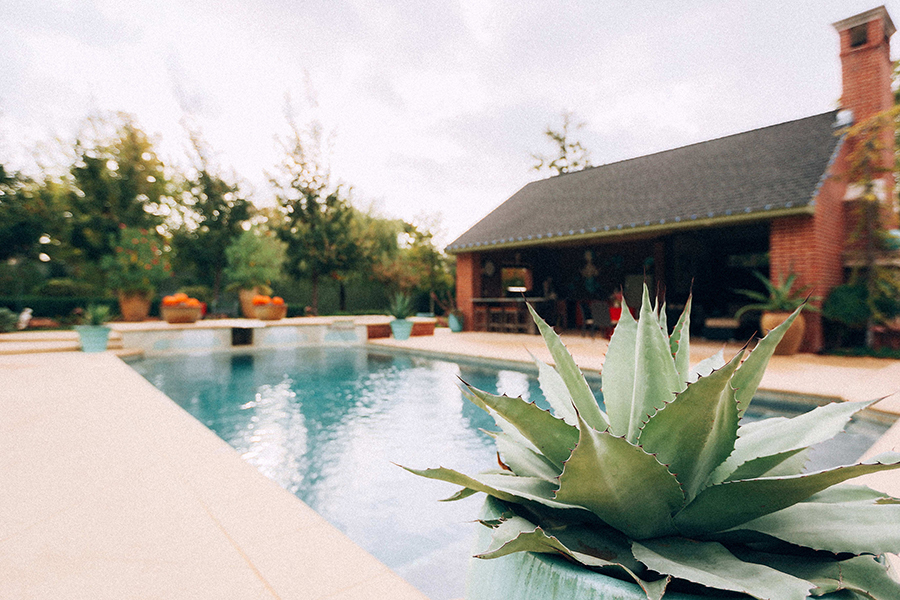 Cactus by a Pool