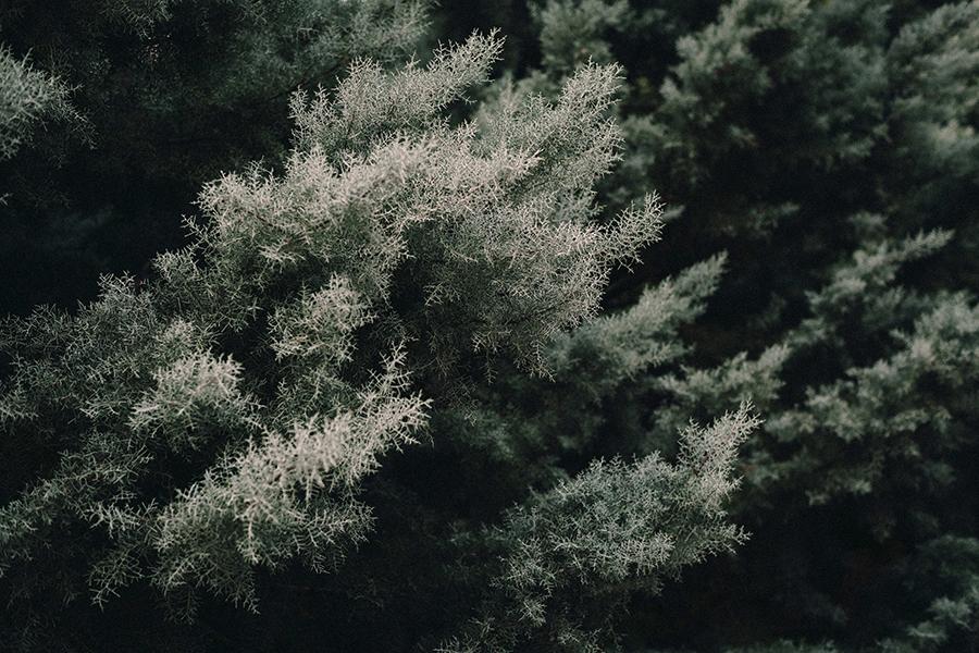 Closeup of bush in landscape