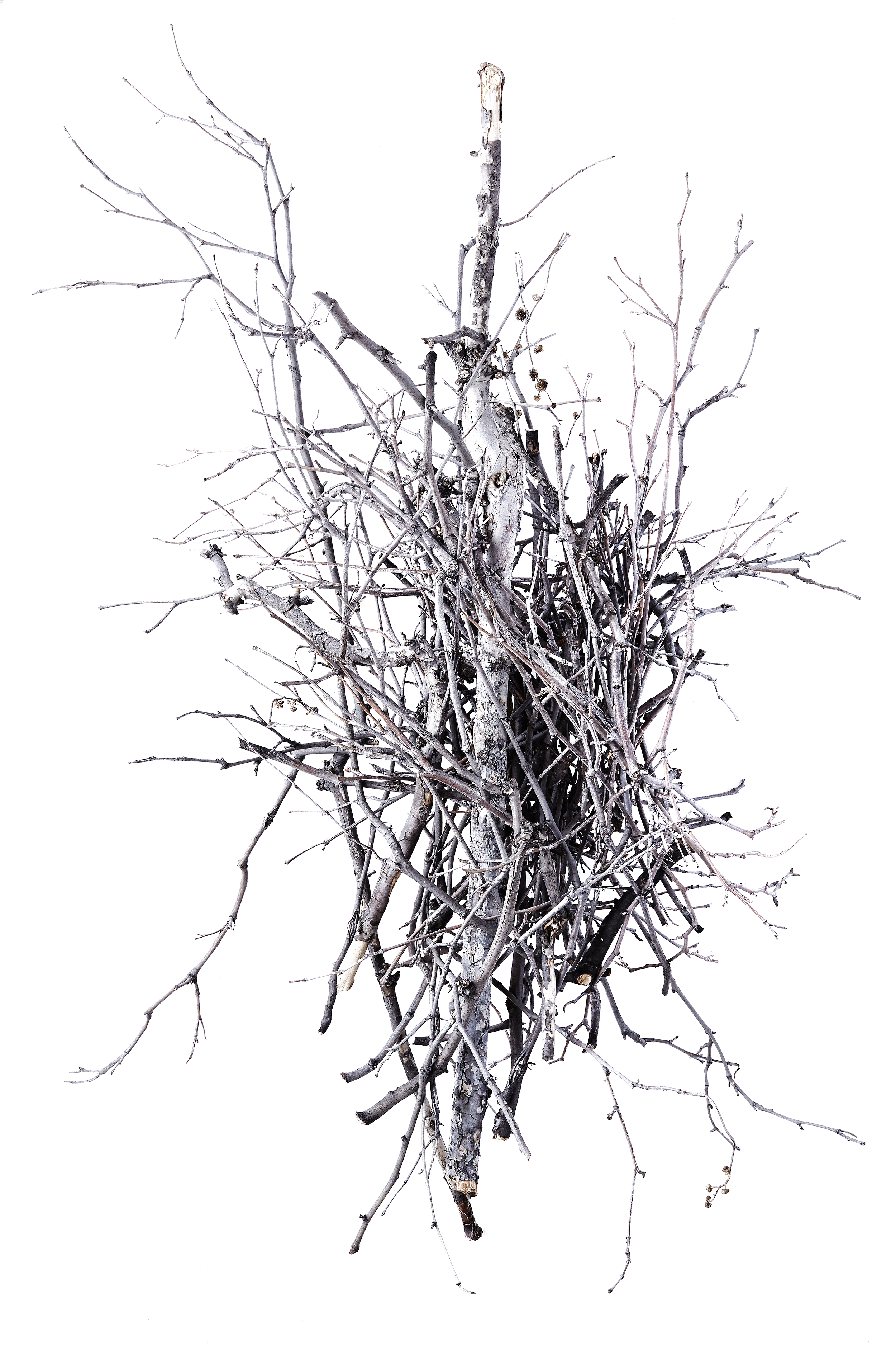 10_treebranch.png