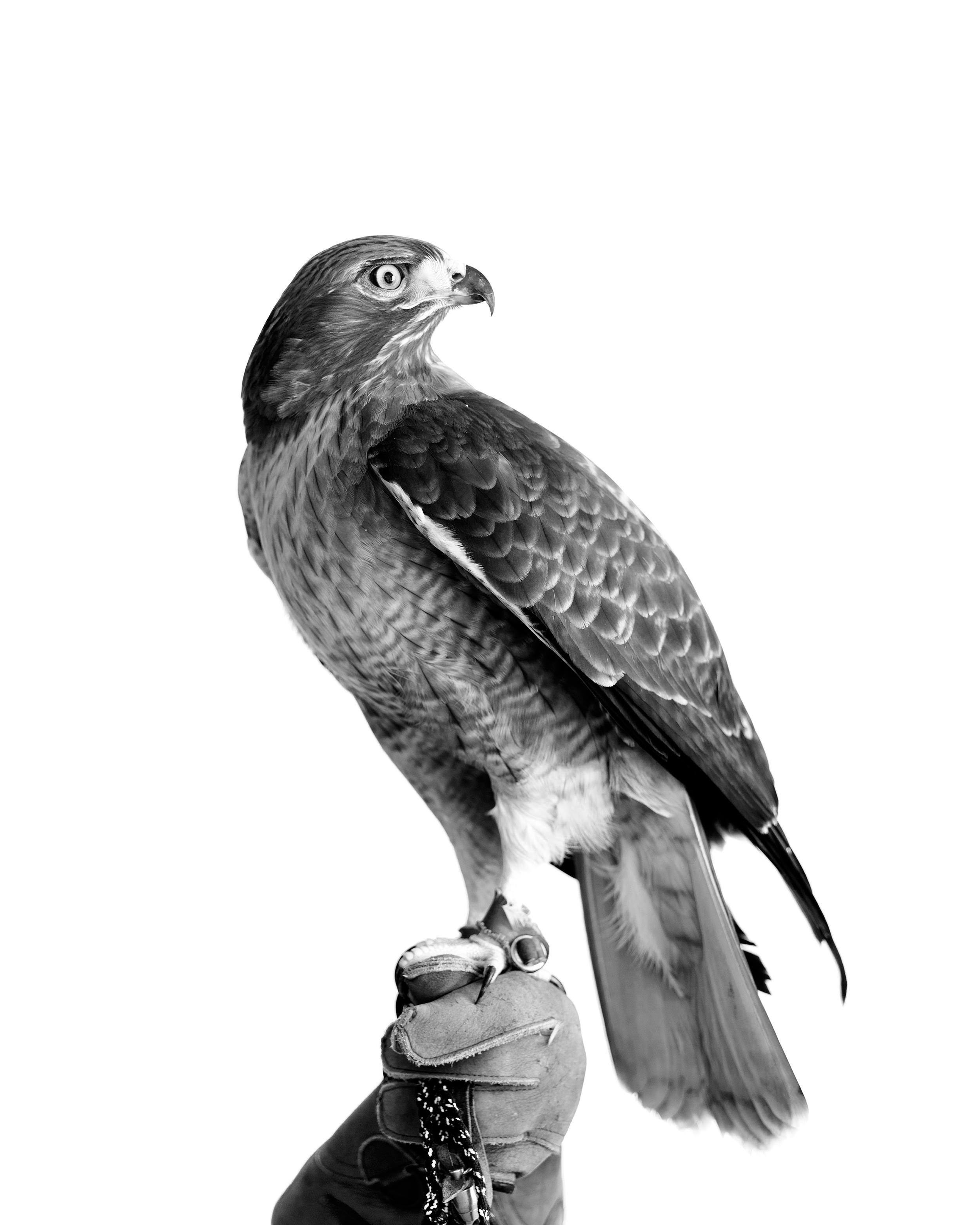 12_eagle.png