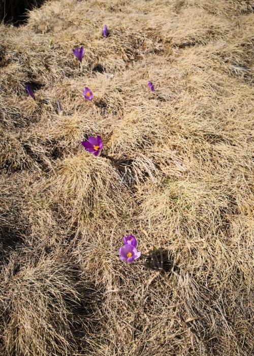 Căi de flori