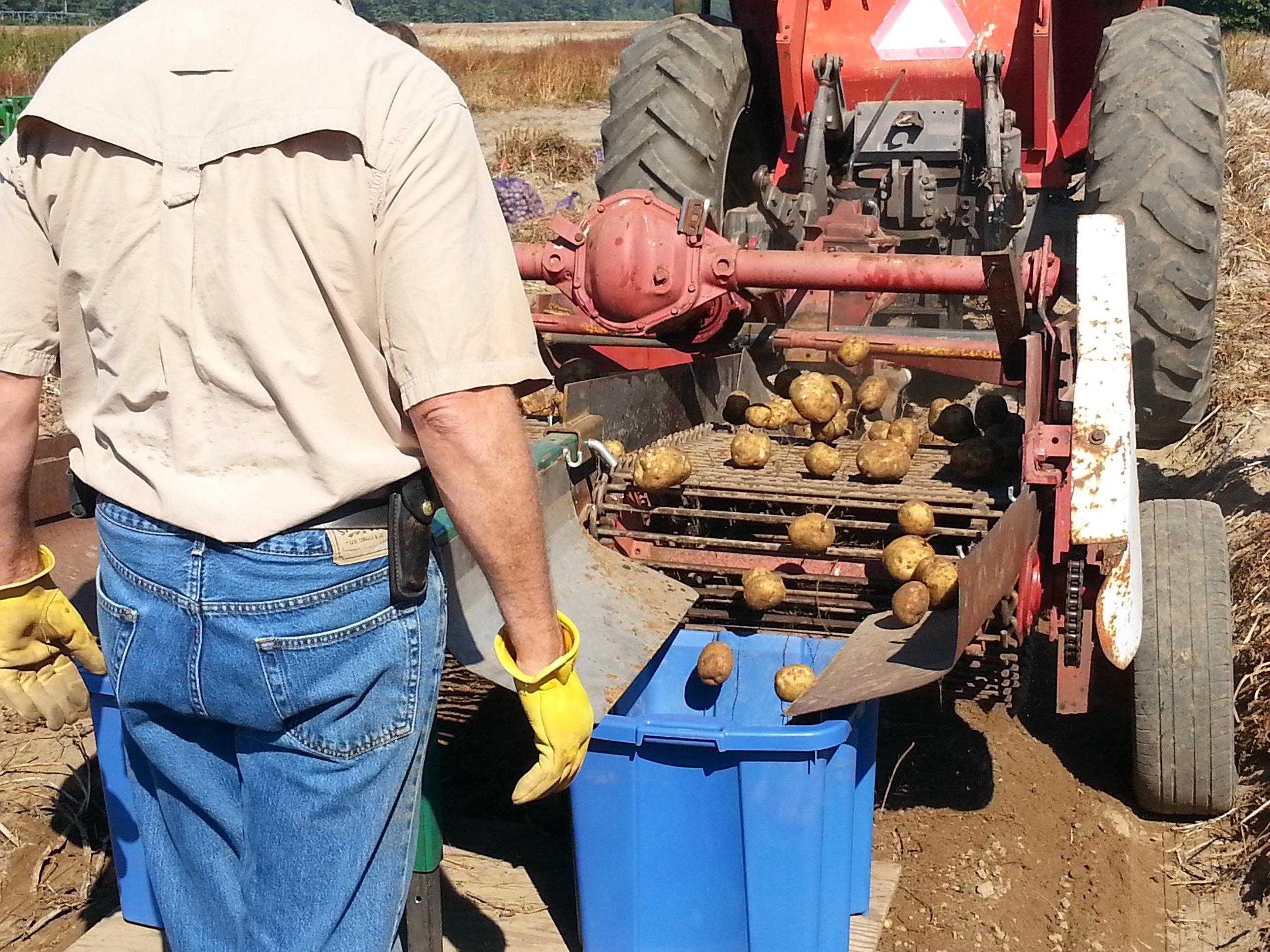 2-Row Potato Digger