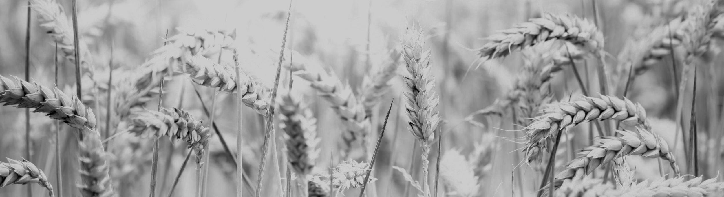 Multi-Grain Cereal -