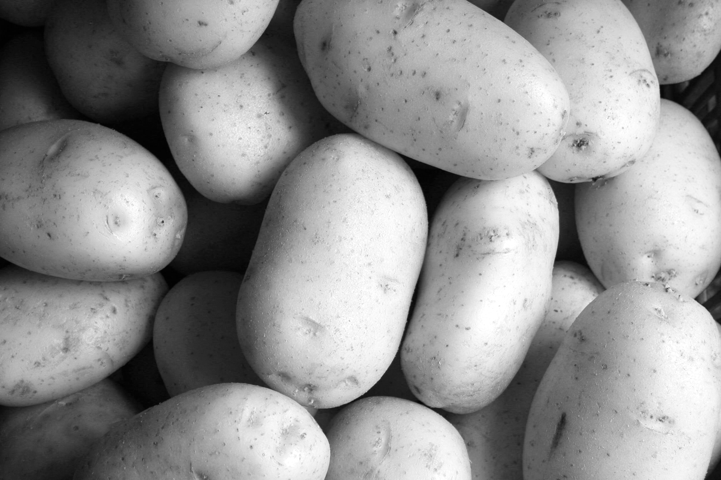Potato Pancake - 30-45 Minutes