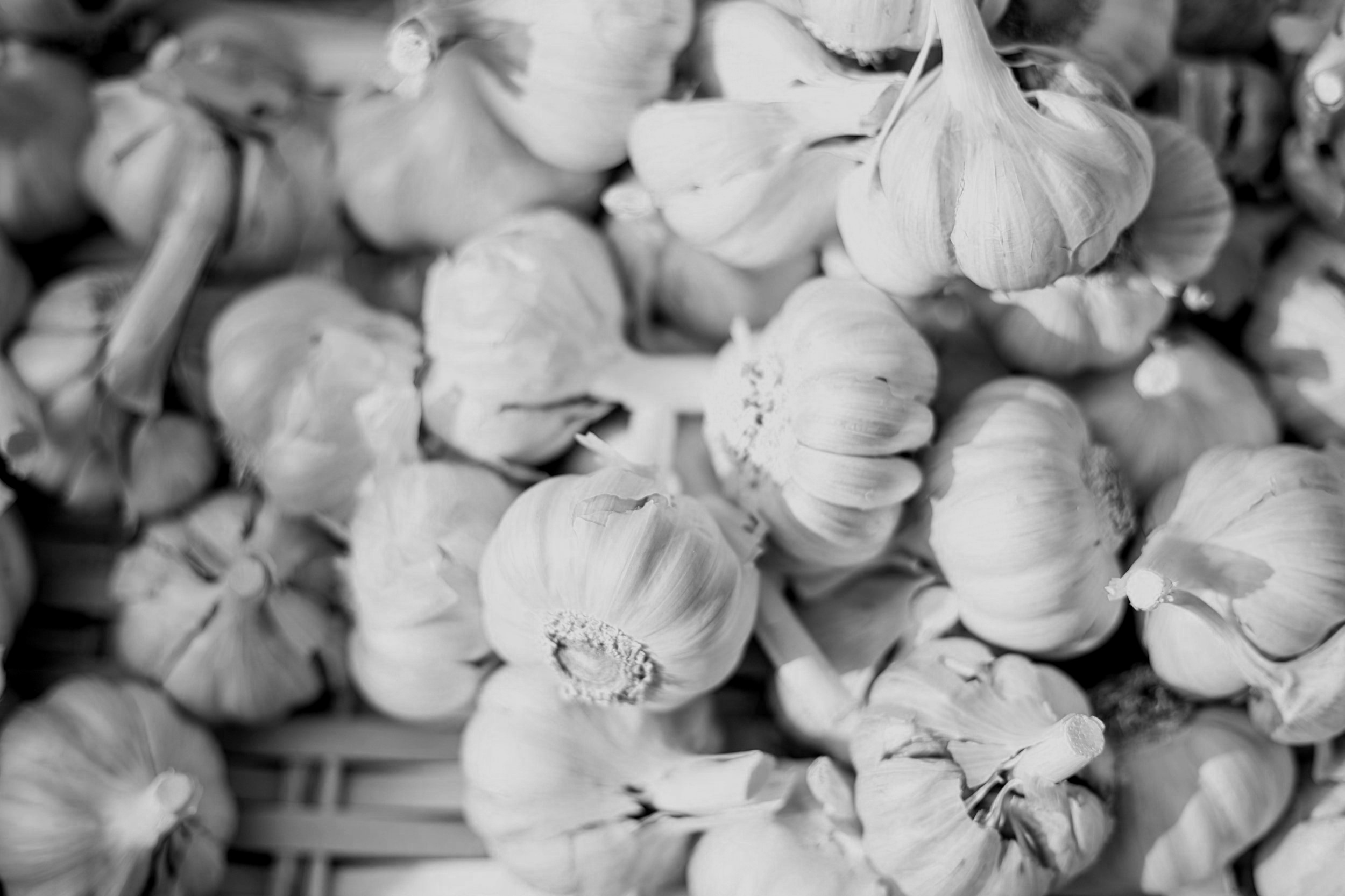 Fermented Garlic -