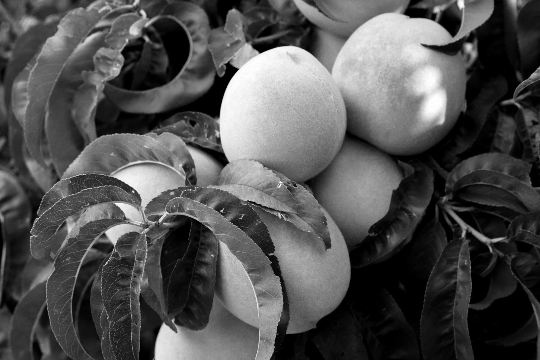 Peach Salsa - 45 Minutes