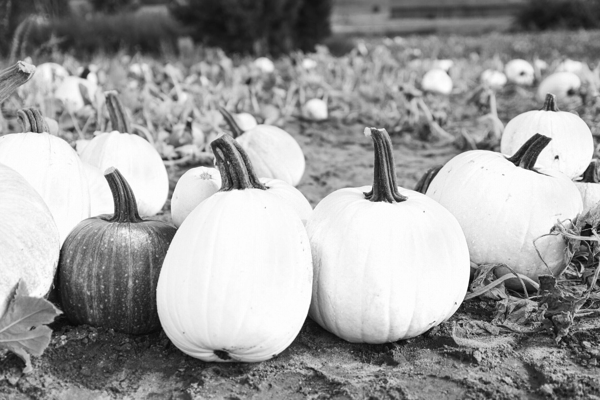 Pumpkin Butter - 35 Minutes