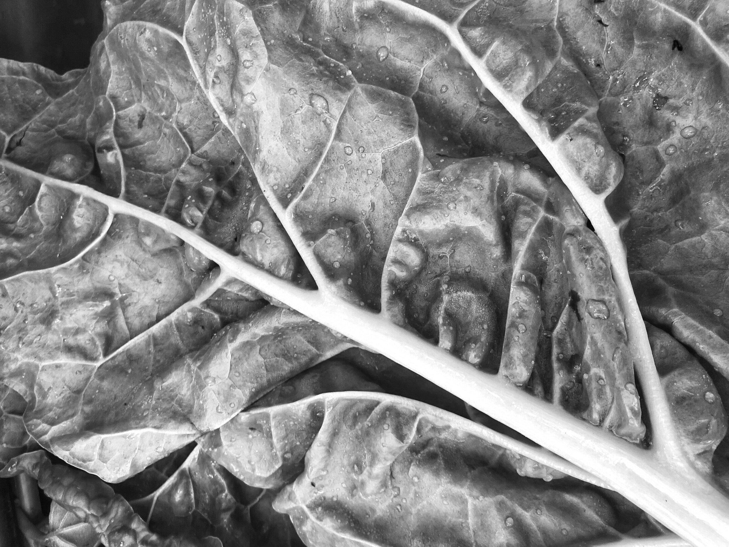 Autumn Salad - 40 Minutes