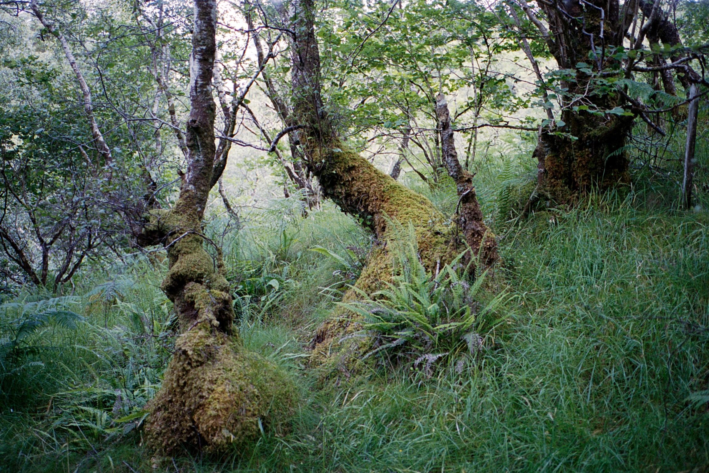 20170701_Scotland-M5-KodakPortra400_013-3.jpg