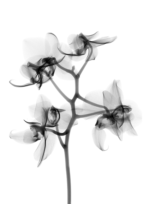 xray-plant.png
