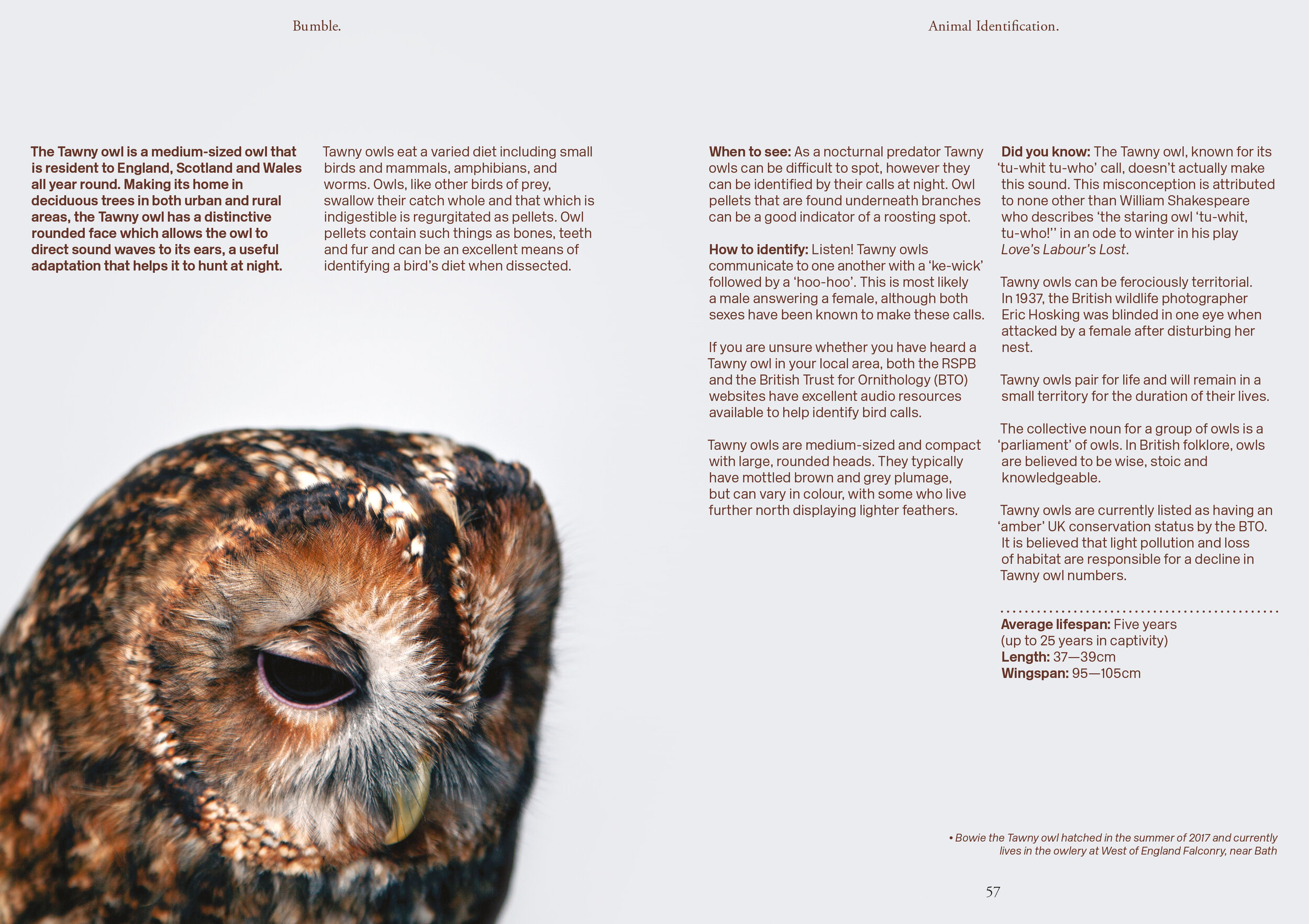 Bumble—Issue Two28(RGB).jpg