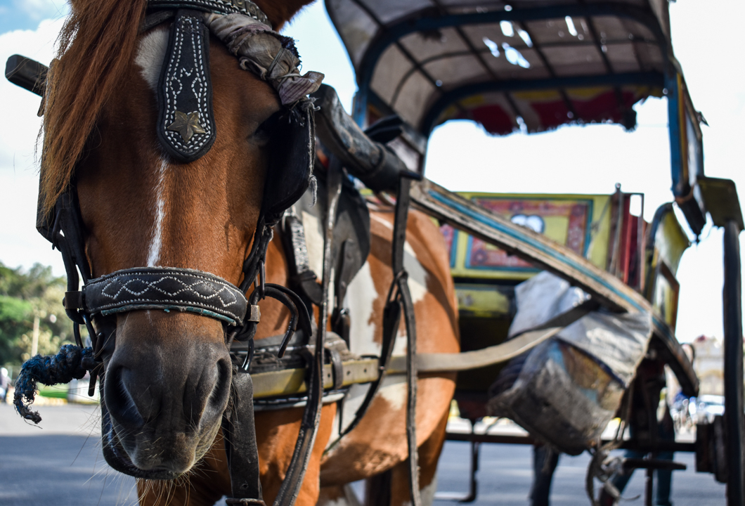 Horse & Carriage Riding -