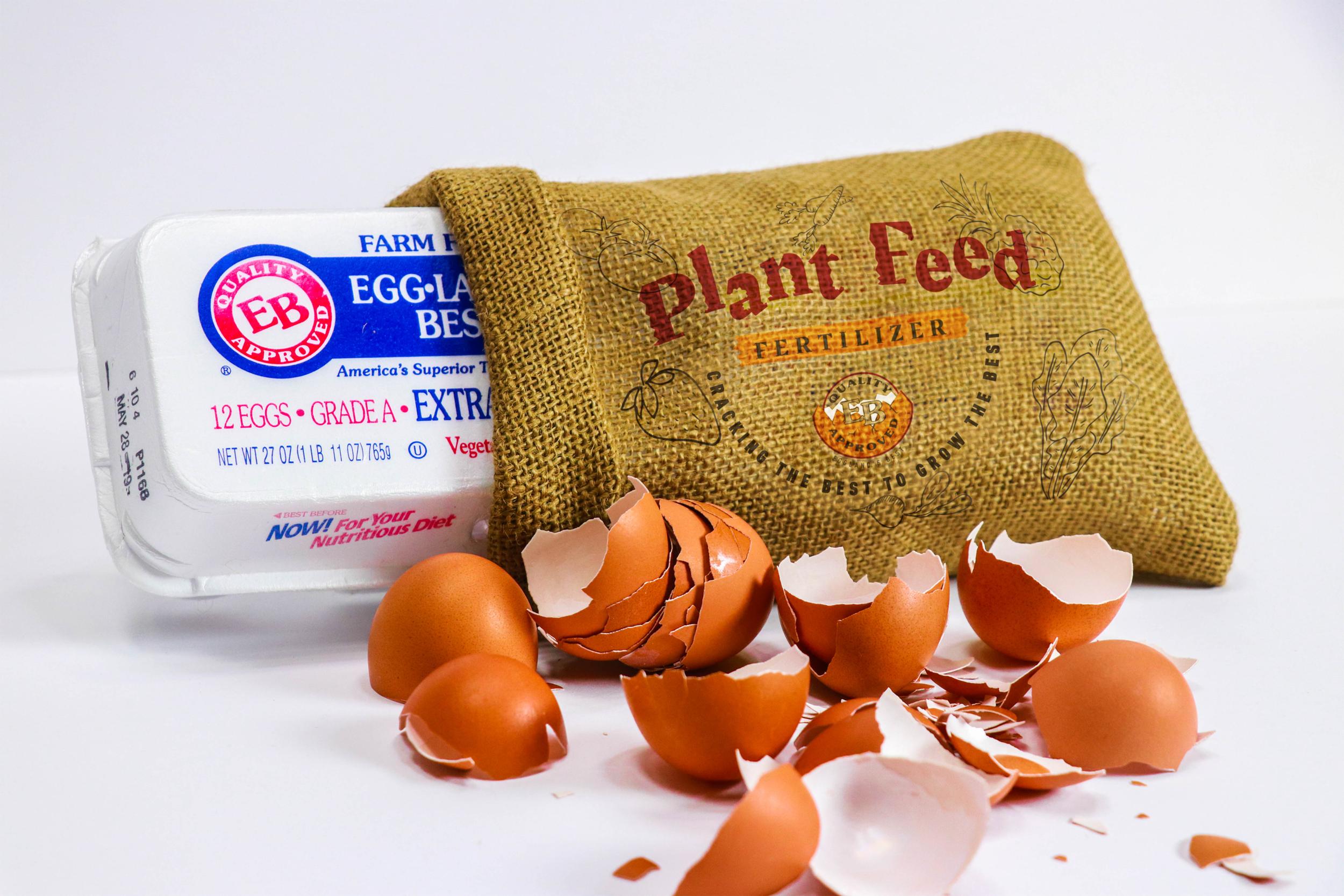 EggPack_1-2.png