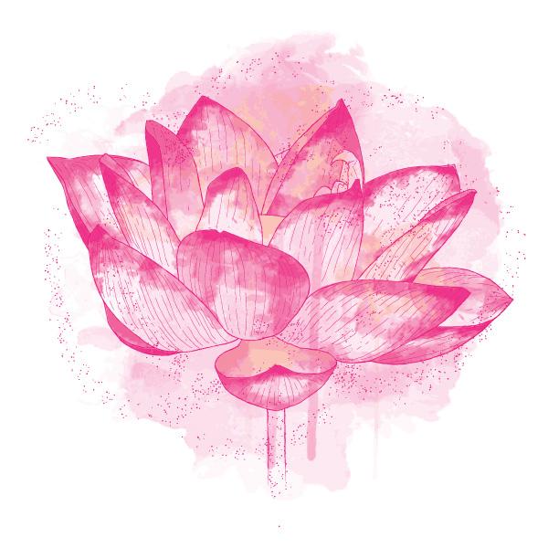 lotus-flower-pink.jpg