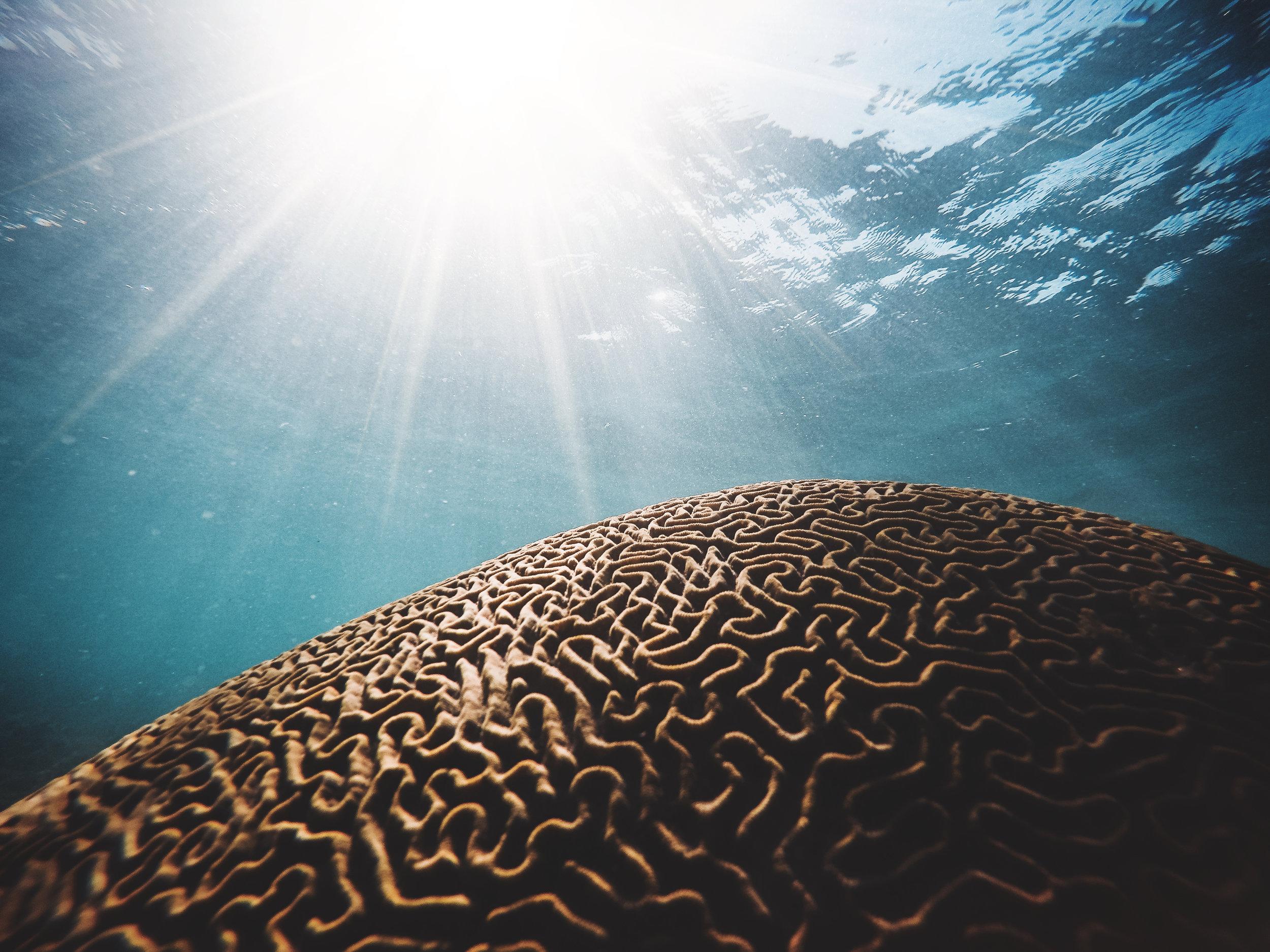Brain Waves & Chakras Level 1,2 - Autumn 2017
