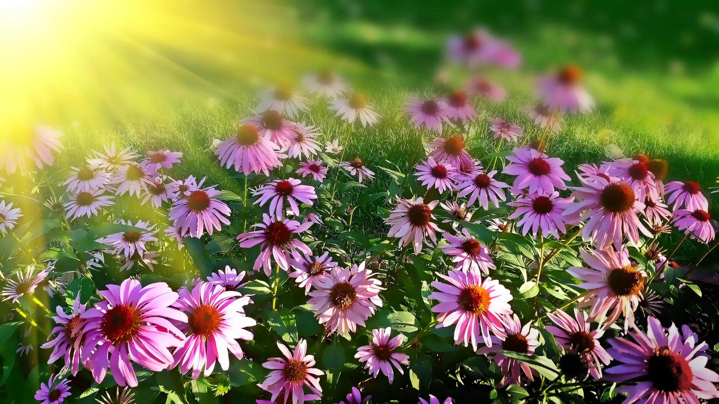 Goddess Gardening: Plant Medicines - Summer 2017, 2018