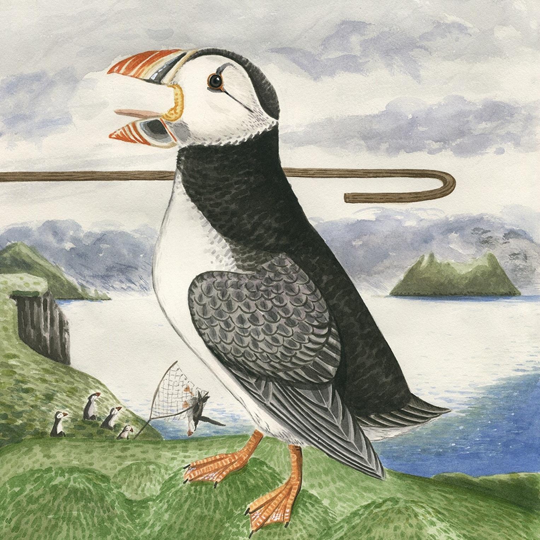 Sea Parrot -