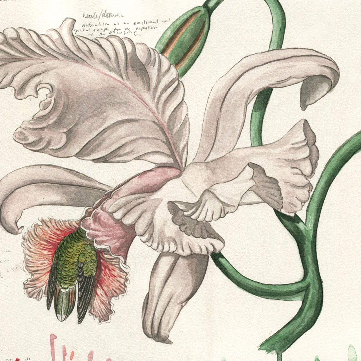 Orchid and the Hairy Hermit -