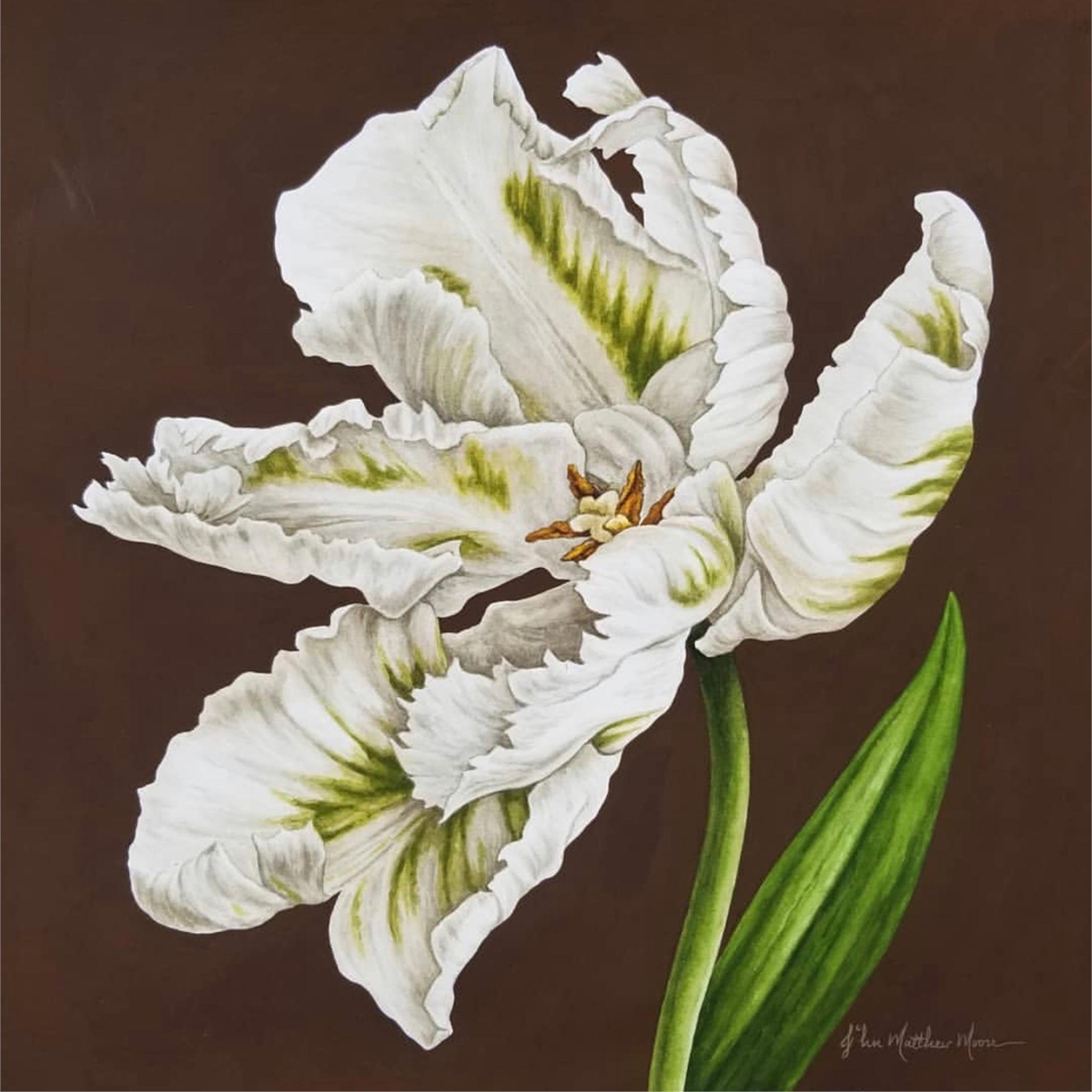 Tulipia, Madonna -
