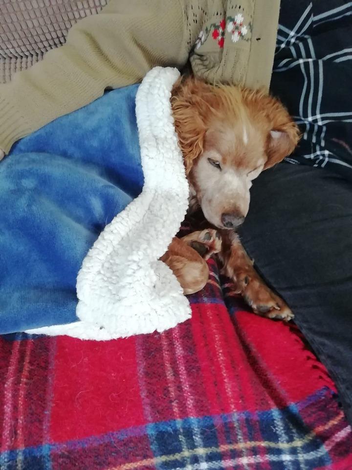 Cani Adopted.jpg